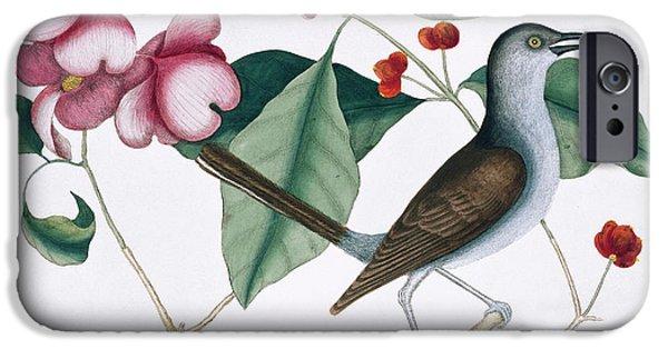 Mockingbird iPhone 6s Case - Northern Mockingbird by Natural History Museum, London