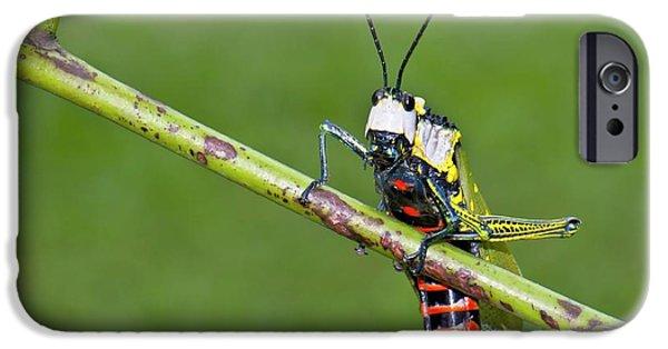 Grasshopper iPhone 6s Case - Northern Spotted Grasshopper by K Jayaram