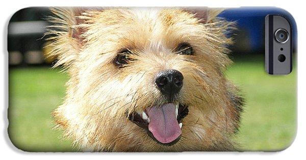 Norwich Terrier  IPhone 6s Case