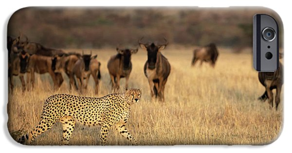 Cheetah iPhone 6s Case - On The Hunt by Renee Doyle