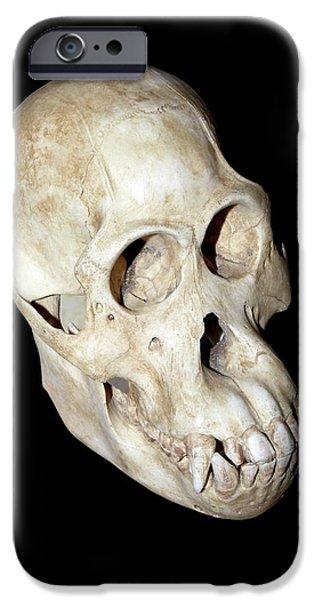 Orangutan iPhone 6s Case - Orangutan Skull by Dirk Wiersma