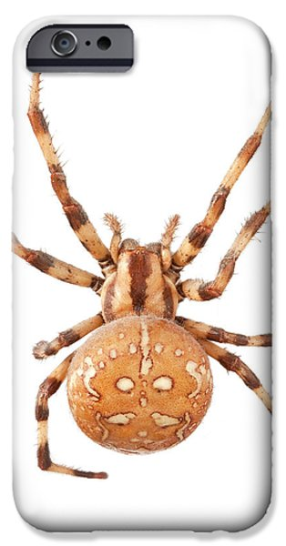 Orb Web Spider IPhone 6s Case
