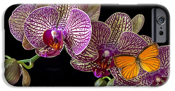 Orchid And Orange Butterfly IPhone 6s Case