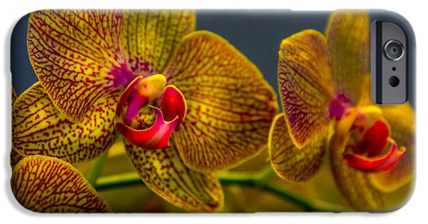 Orchid Color IPhone 6s Case