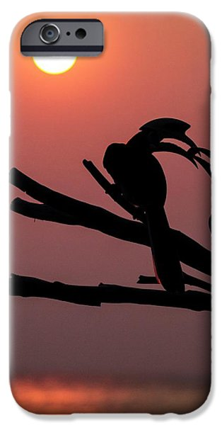 Oriental Pied Hornbills IPhone 6s Case by Paul Williams