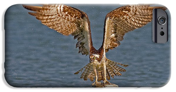 Osprey Morning Catch IPhone 6s Case by Susan Candelario