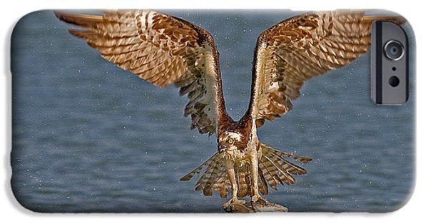 Osprey Morning Catch IPhone 6s Case