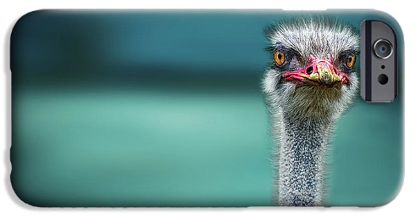 Ostrich iPhone 6s Case - Ostrich Protecting Two Poor Chicken From The Wind by Piet Flour