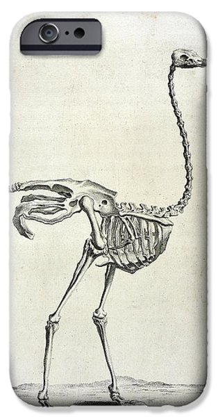Ostrich iPhone 6s Case - Ostrich Skeleton by British Library