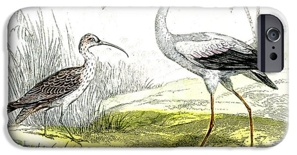 Painted Storks IPhone 6s Case