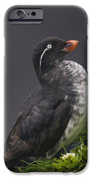 Parakeet Auklet Sitting In Green IPhone 6s Case
