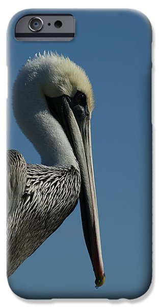 Pelican Profile 2 IPhone 6s Case by Ernie Echols