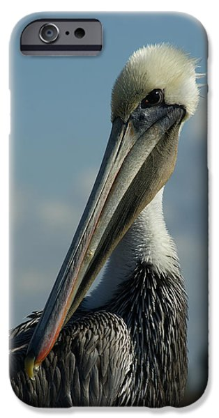 Pelican Profile IPhone 6s Case by Ernie Echols