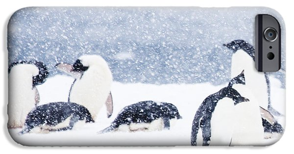 Penguins In The Snow IPhone 6s Case by Carol Walker