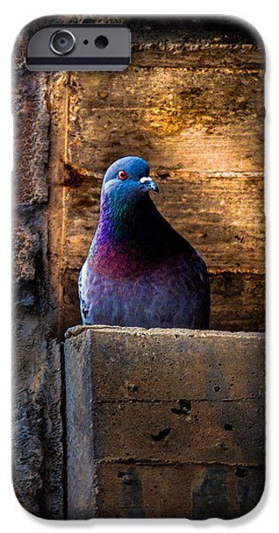 Pigeon iPhone 6s Case - Pigeon Of The City by Bob Orsillo
