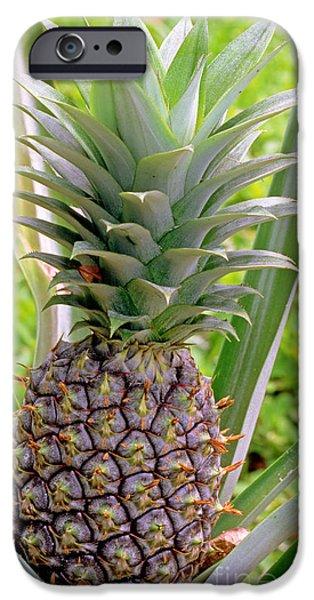 Pineapple Plant IPhone 6s Case