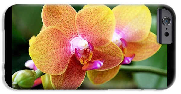 Pink Yellow Orchid IPhone 6s Case