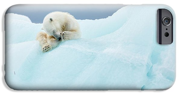 Polar Bear iPhone 6s Case - Polar Bear Grooming by Joan Gil Raga