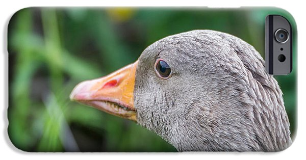 Gosling iPhone 6s Case - Portrait Of Greylag Goose, Iceland by Panoramic Images