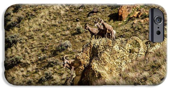 Rocky Mountain Bighorn Sheep iPhone 6s Case - Posing Bighorn Sheep by Robert Bales