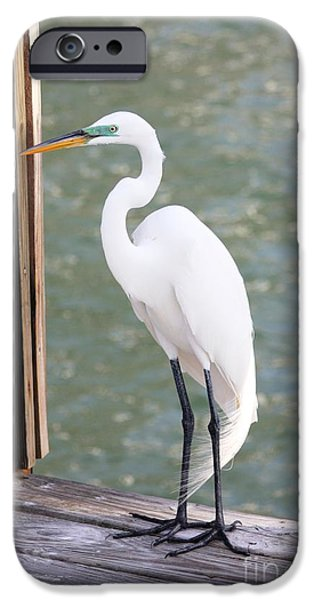 Pretty Great Egret IPhone 6s Case