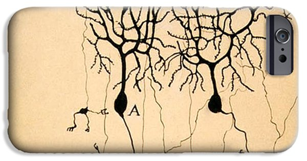 Pigeon iPhone 6s Case - Purkinje Cells By Cajal 1899 by Science Source
