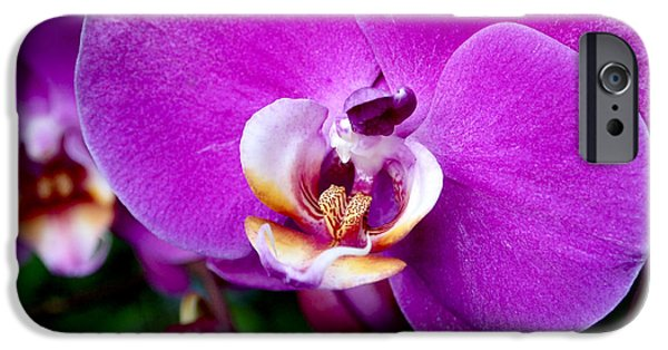 Purple Orchid IPhone 6s Case