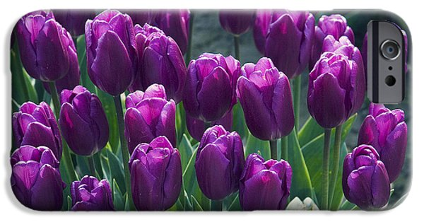 Purple Tulips IPhone 6s Case