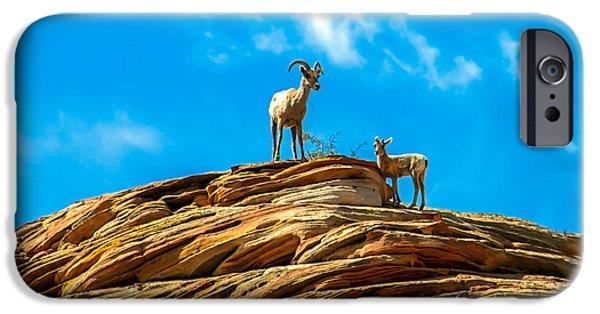 Rocky Mountain Bighorn Sheep iPhone 6s Case - Queen Ewe by Robert Bales