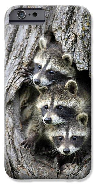 Raccoon Trio At Den Minnesota IPhone 6s Case