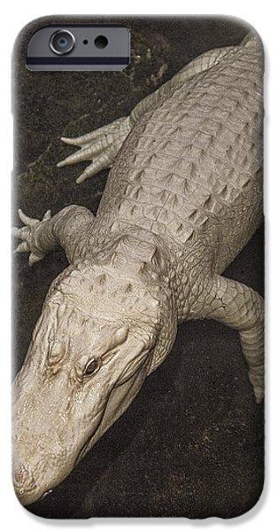 Rare White Alligator IPhone 6s Case