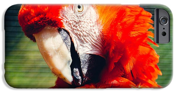 Red Macaw Closeup IPhone 6s Case by Pati Photography