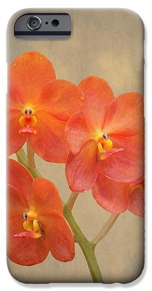 Scarlet iPhone 6s Case - Red Scarlet Orchid On Grunge by Rudy Umans