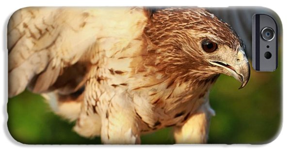 Red Tailed Hawk Hunting IPhone 6s Case by Dan Sproul