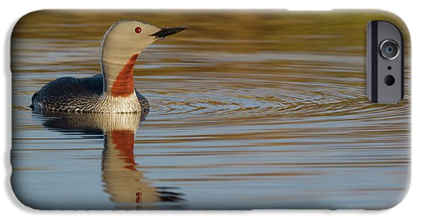 Red-throated Loon IPhone 6s Case