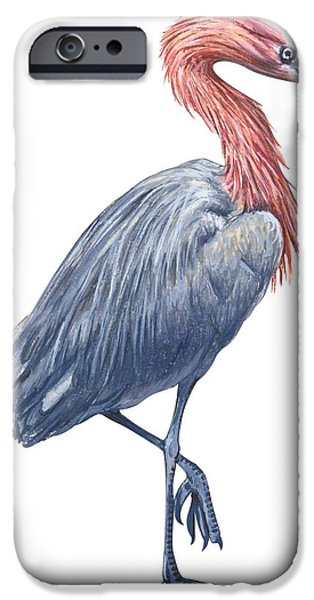 Reddish Egret IPhone 6s Case by Anonymous