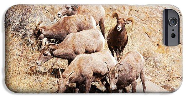 Rocky Mountain Bighorn Sheep iPhone 6s Case - Rocky Mountain Bighorn Sheep Herd by Piperanne Worcester