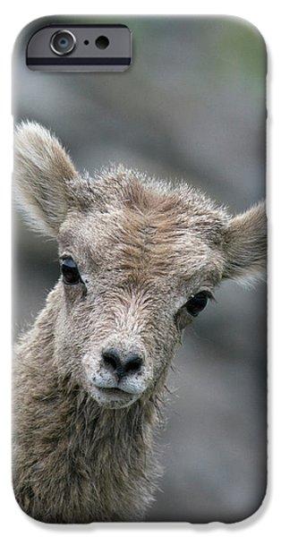 Rocky Mountain Bighorn Sheep iPhone 6s Case - Rocky Mountain Bighorn Sheep Lamb by Ken Archer