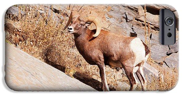 Rocky Mountain Bighorn Sheep iPhone 6s Case - Rocky Mountain Bighorn Sheep, One Ram by Piperanne Worcester