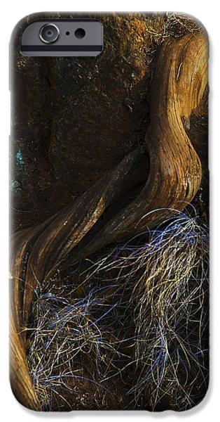 Tree Root IPhone 6s Case