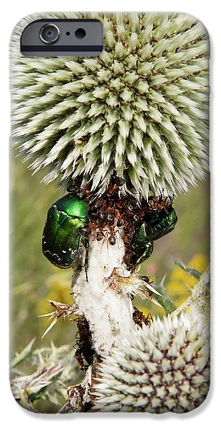 Rose Chafers And Ants On Thistle Flowers IPhone 6s Case by Bob Gibbons
