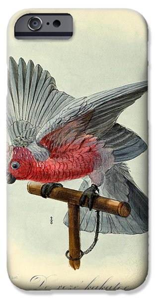 Rose Cockatoo IPhone 6s Case by Rob Dreyer