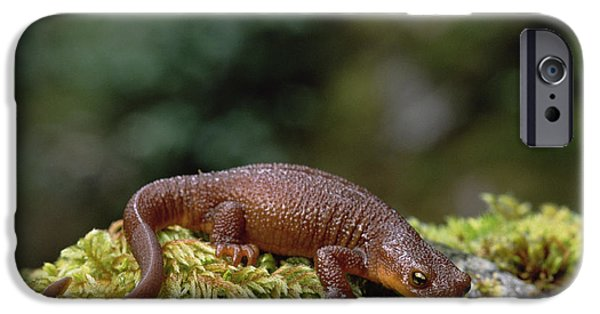 Newts iPhone 6s Case - Rough-skinned Newt Oregon by Gerry Ellis