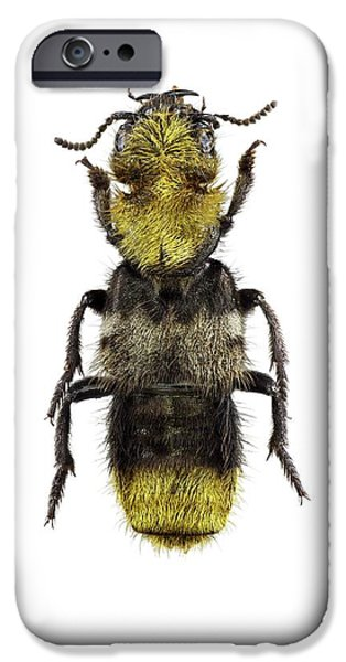 Rove Beetle IPhone 6s Case