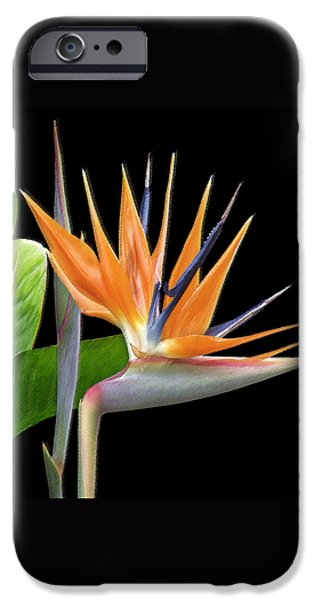 Crane iPhone 6s Case - Royal Beauty I - Bird Of Paradise by Ben and Raisa Gertsberg