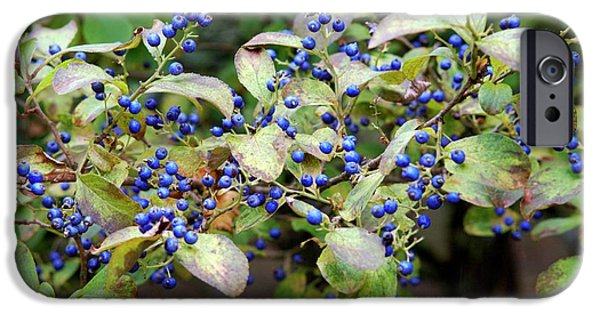 Blue Berry iPhone 6s Case - Sapphire Berries (symplocos Paniculata ) by Frank M Hough