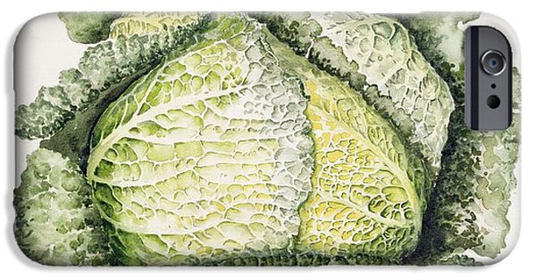 Savoy Cabbage  IPhone 6s Case by Alison Cooper