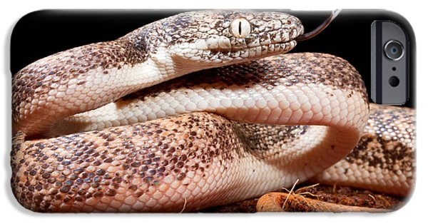 Savu Python In Defensive Posture IPhone 6s Case