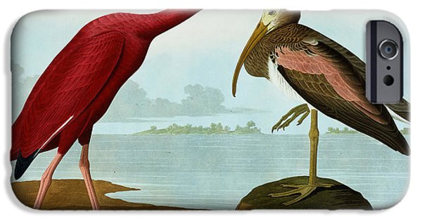 Scarlet Ibis IPhone 6s Case