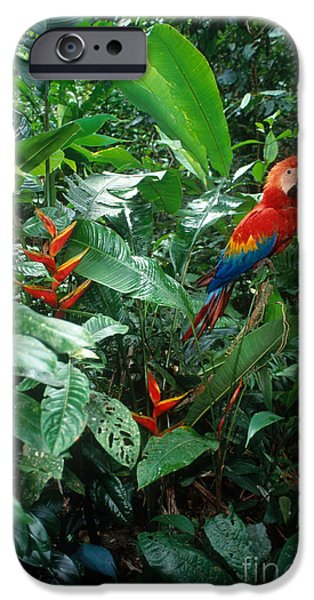 Scarlet Macaw IPhone 6s Case by Art Wolfe